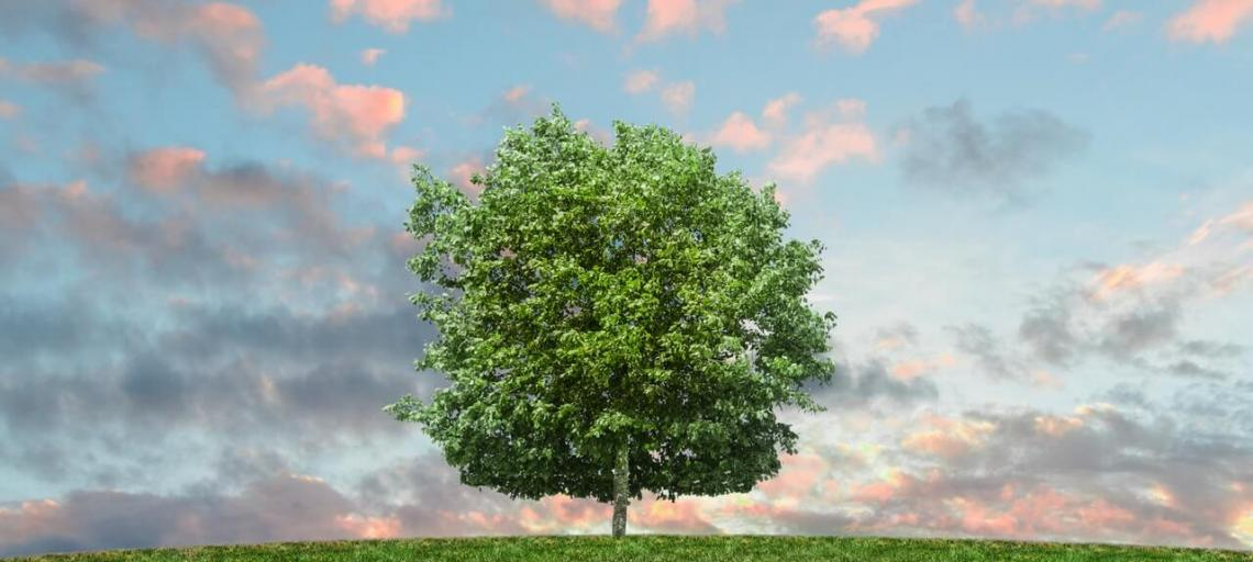 48 Simple and easy ways to live an eco friendly life and save Earth